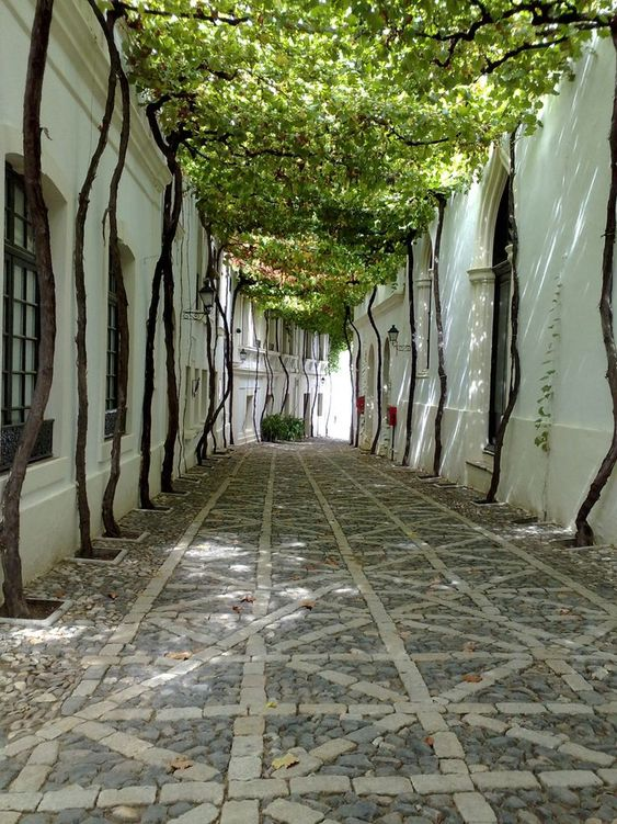 Photo d'une ruelle de la ville de Saint-André